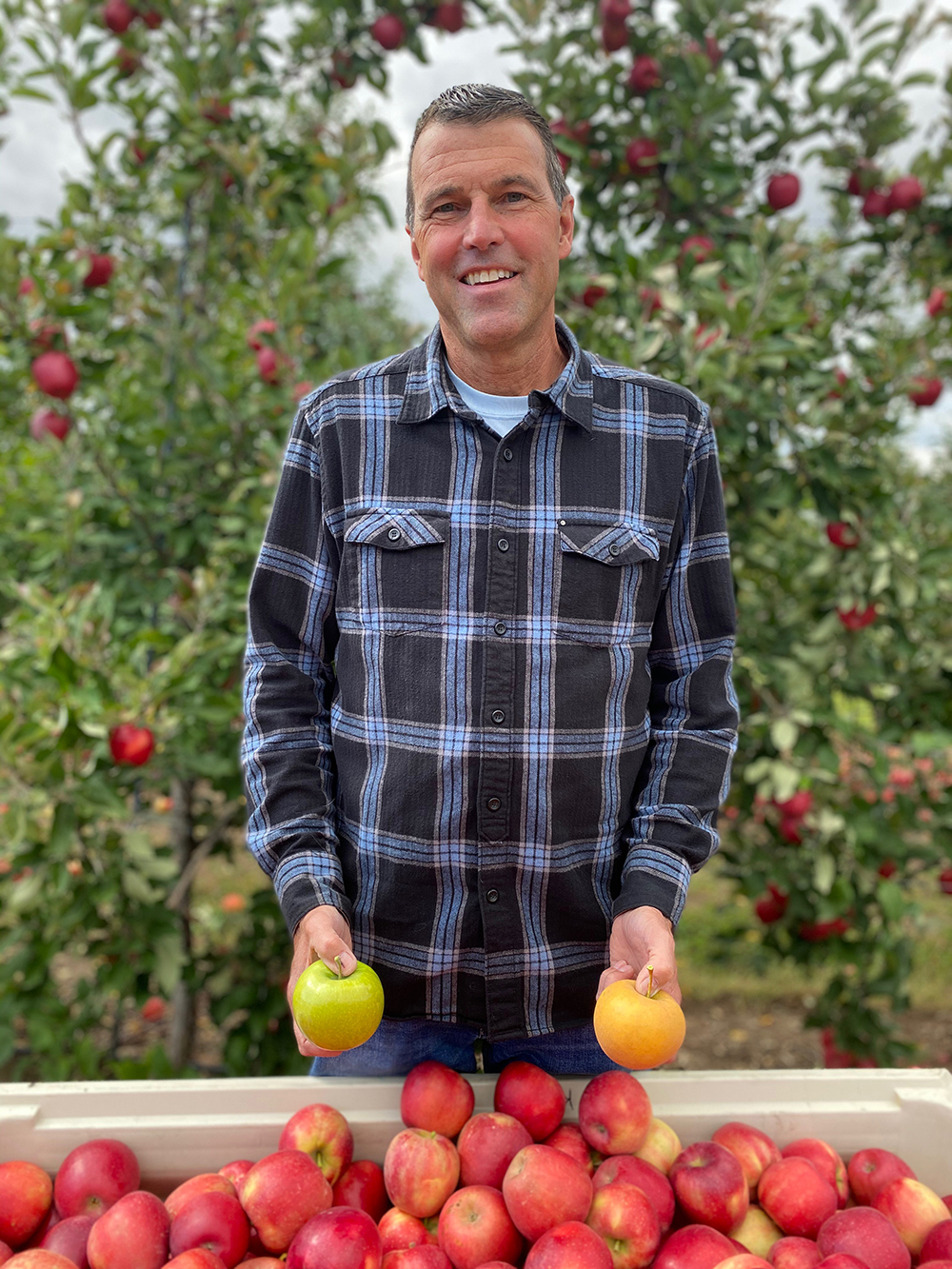 A man standing in an orchard holding apples