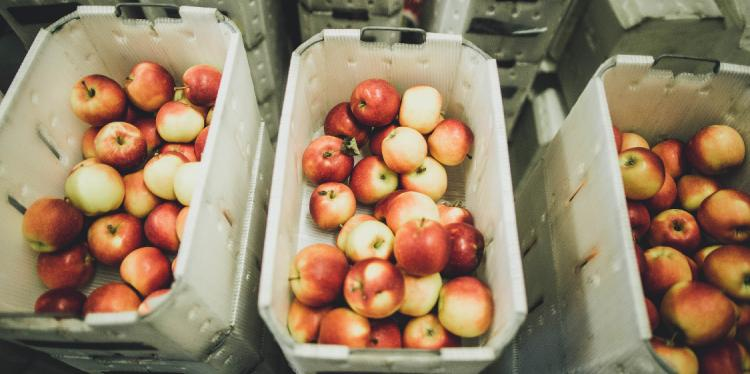 Apples at Cornell Orchards