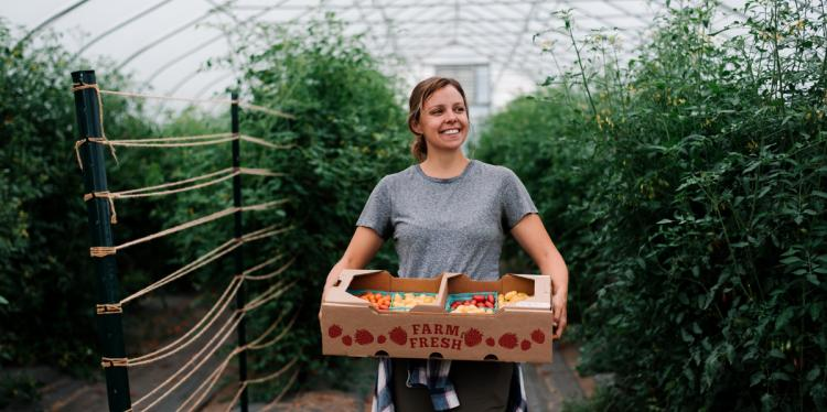 Hannah Swegarden, horticulture doctoral student, with a bin of Galaxy Suite tomatoes