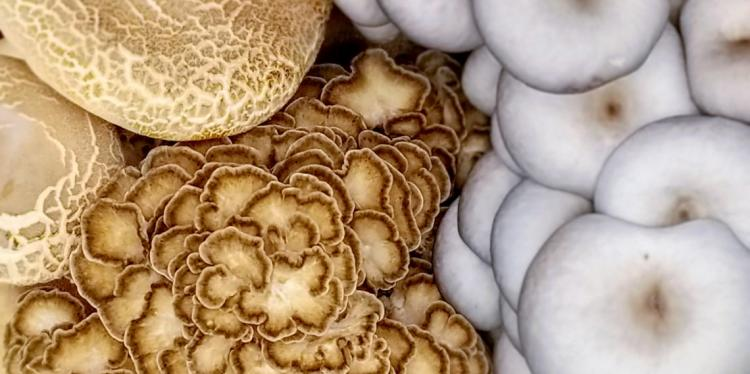 Close-up of several different kinds of mushrooms