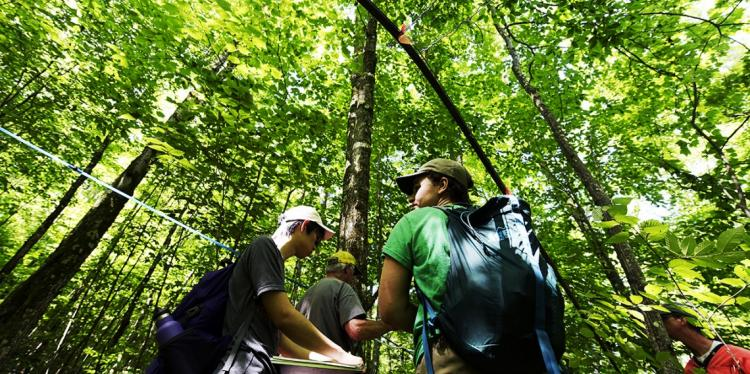 Students conduct research in the forest