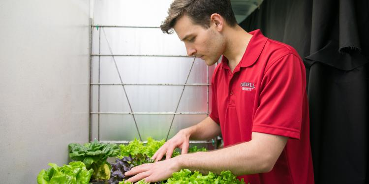 A student examines plants as part of his research