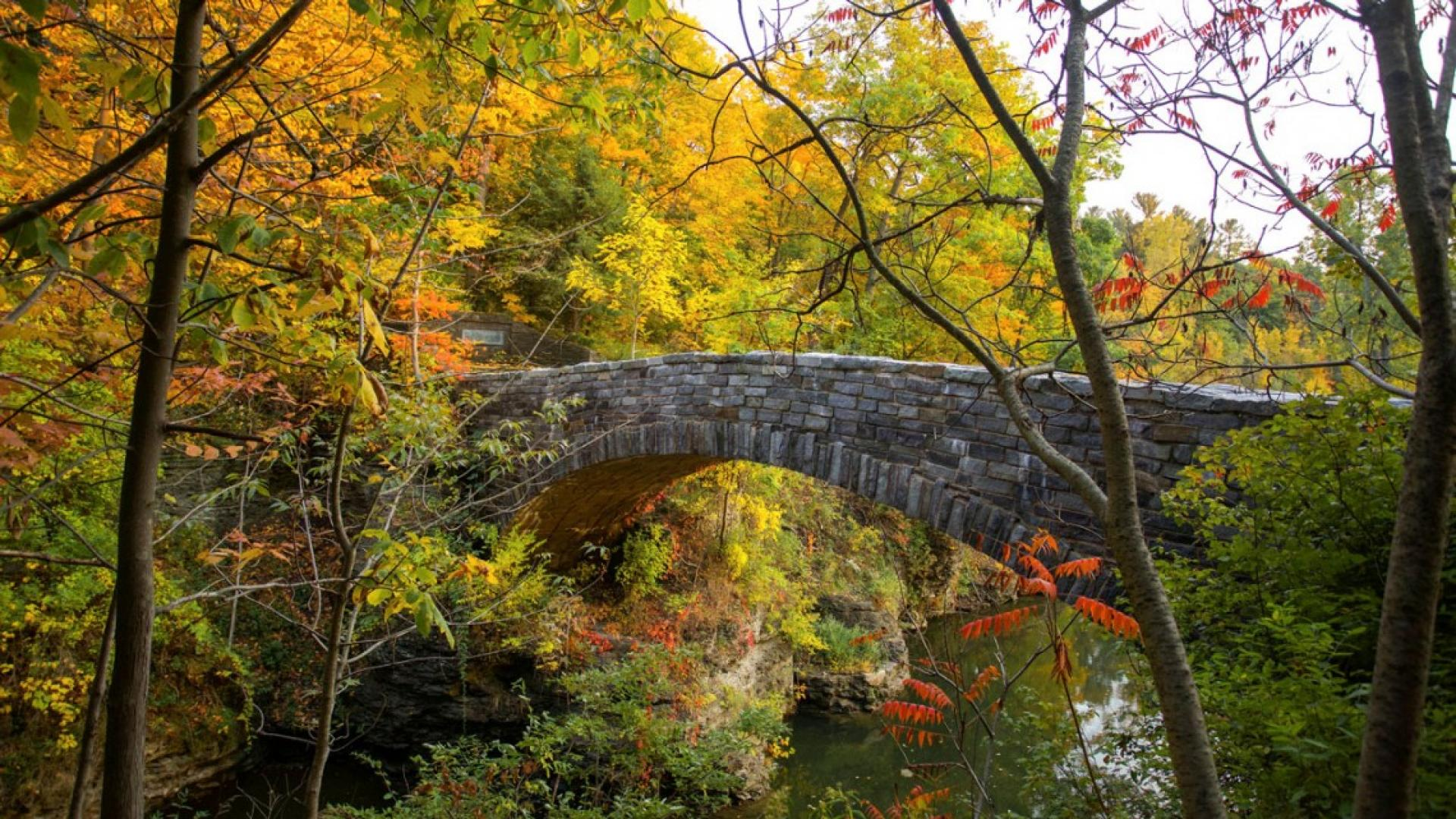 A stone foot bridge surrounded by foliage