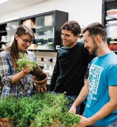Students examining roots of potted vetch plants in lab