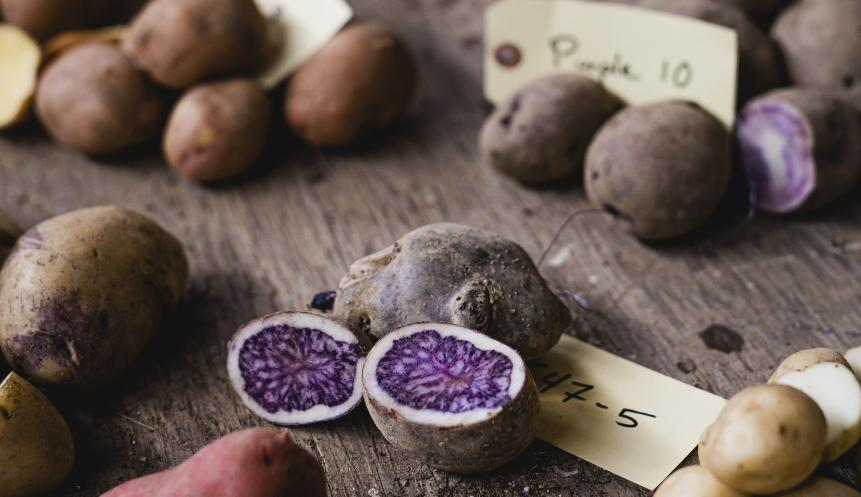 purple and white potatoes cut open on a wood table
