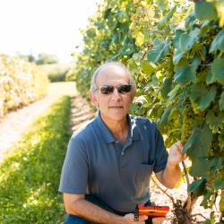A man stands in a sunny vineyard