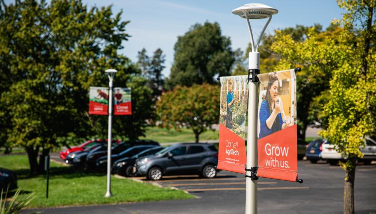 Banners on lightposts in a parking lot with green trees and grass