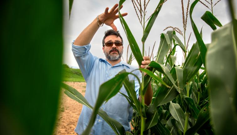 man standing with corn plant