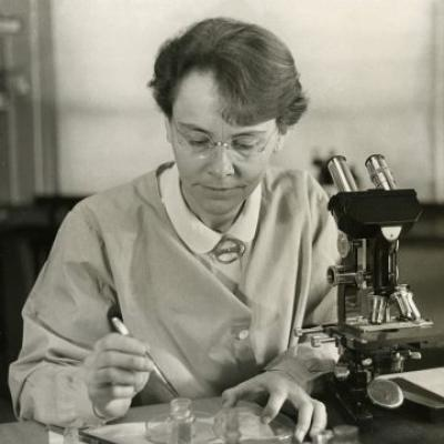 Barbara McClintock in her laboratory