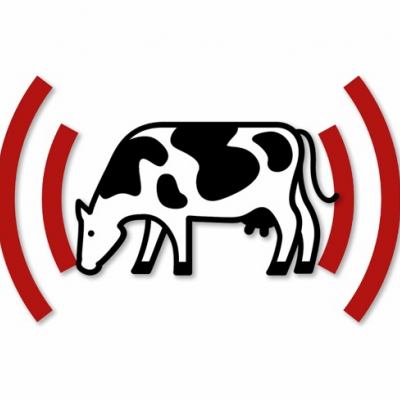 dairy cow with audio waves graphic