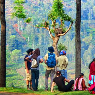 Male and female students standing outside on grass with their backs to the camera looking out at a beautiful view of green trees and forest