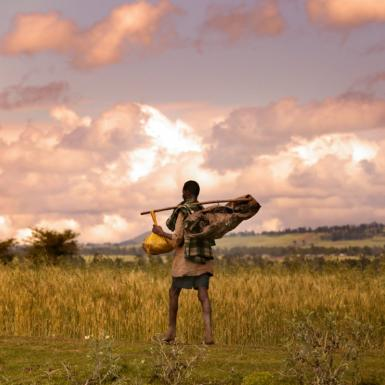 A man walking through a field of wheat with a stick slung over his shoulder carrying several bags