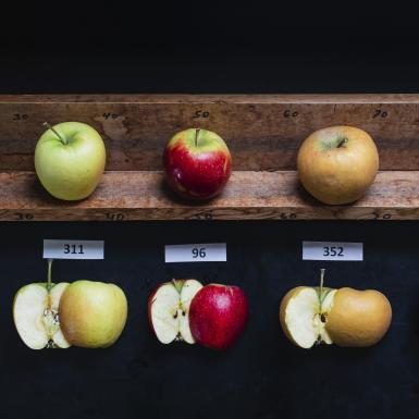five different green and red apples on a wood slab