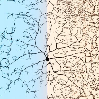 A microscopic shot of dendrites growing out of a single neuron