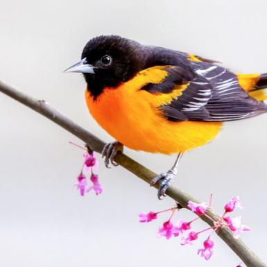 A yellow and black bird sitting on a tree branch