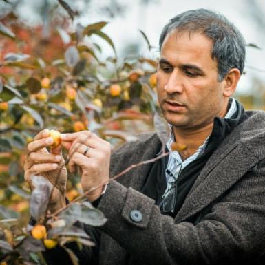A man inspecting an apple on a branch outside