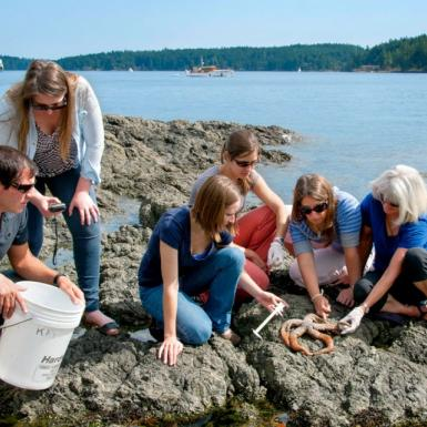 Five students and one teacher sitting on a rock next to the ocean and looking at a starfish