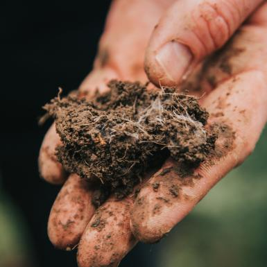 a hand holds a clump of soil