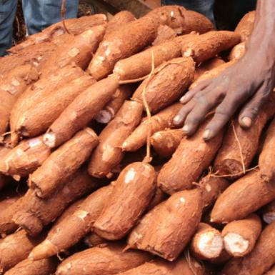 A hand touches cassava stacked in basket