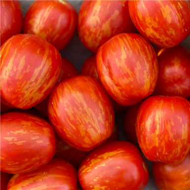 red cherry tomatoes with gold stripes