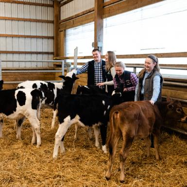 The 2019 Chobani Scholars (from left to right) Blake Wadsworth '23, Emily Starceski '23, Caroline Lafferty '23, and Cassandra Wilbur '23, interact with cows at the Cornell University Dairy Research Center