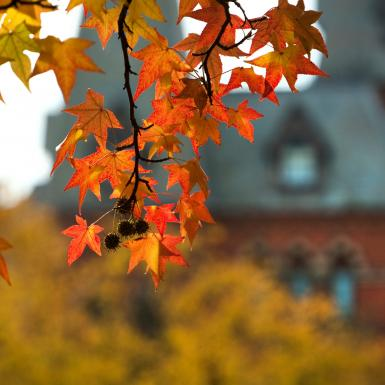 Photo of red and orange leaves in the foreground and a brick building in the background.