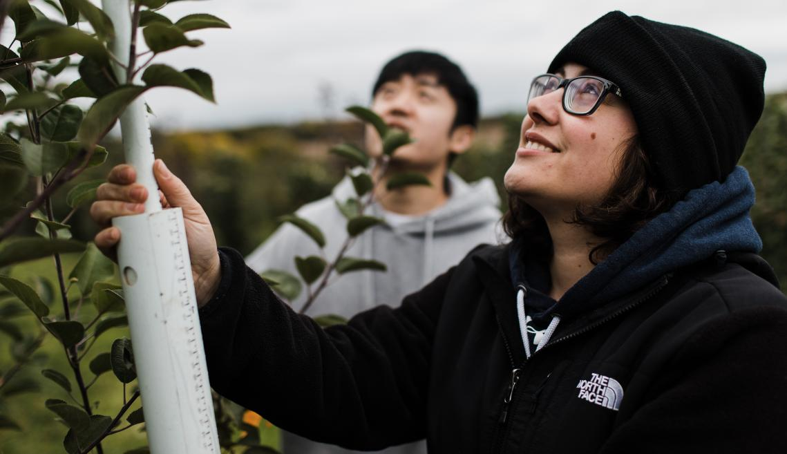 aura Dougherty, Ph.D. student, and Seung Hyun Ban, Ph.D. student, studying apple genetics of tree architecture in research orchards.