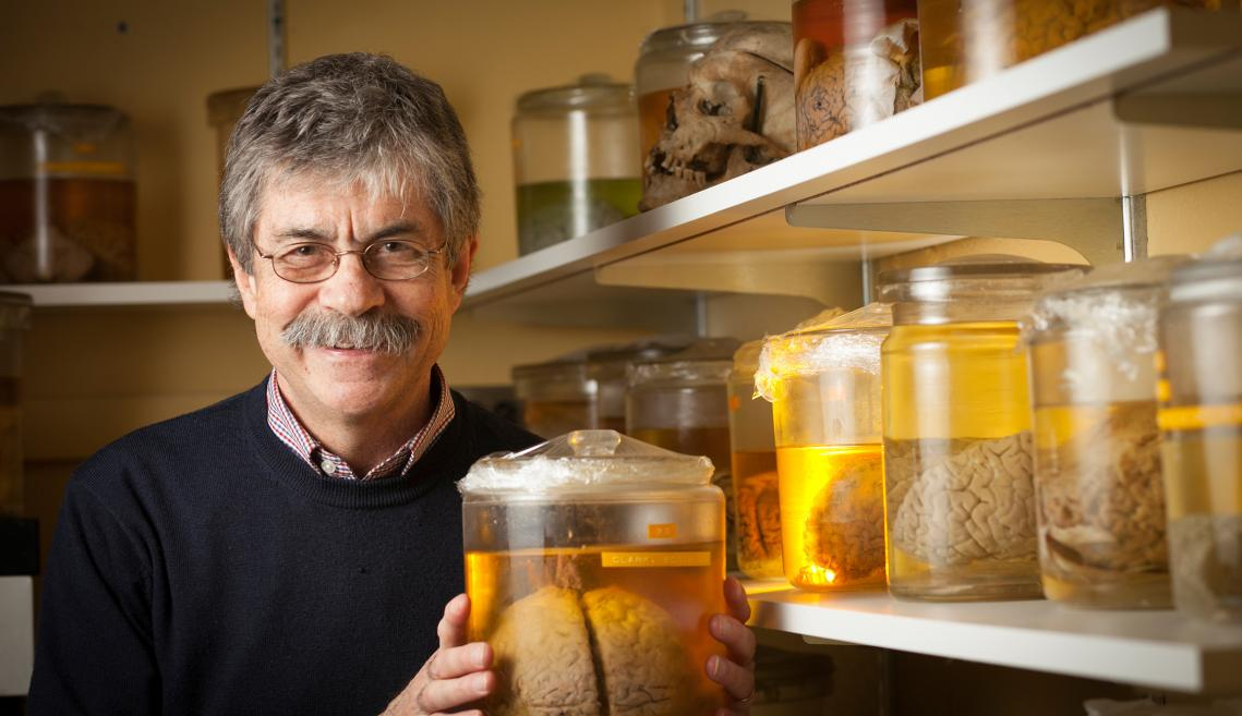 Ronald Harris-Warrick with specimens from the Wilder Brain Collection