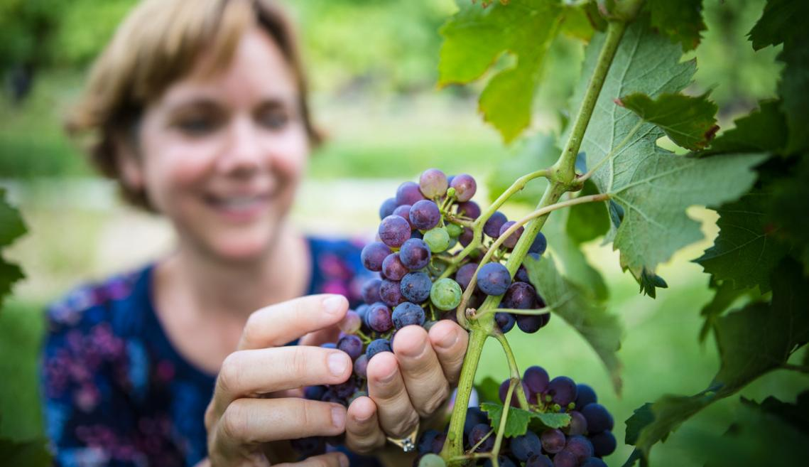 Woman looking at grapes on a vine.