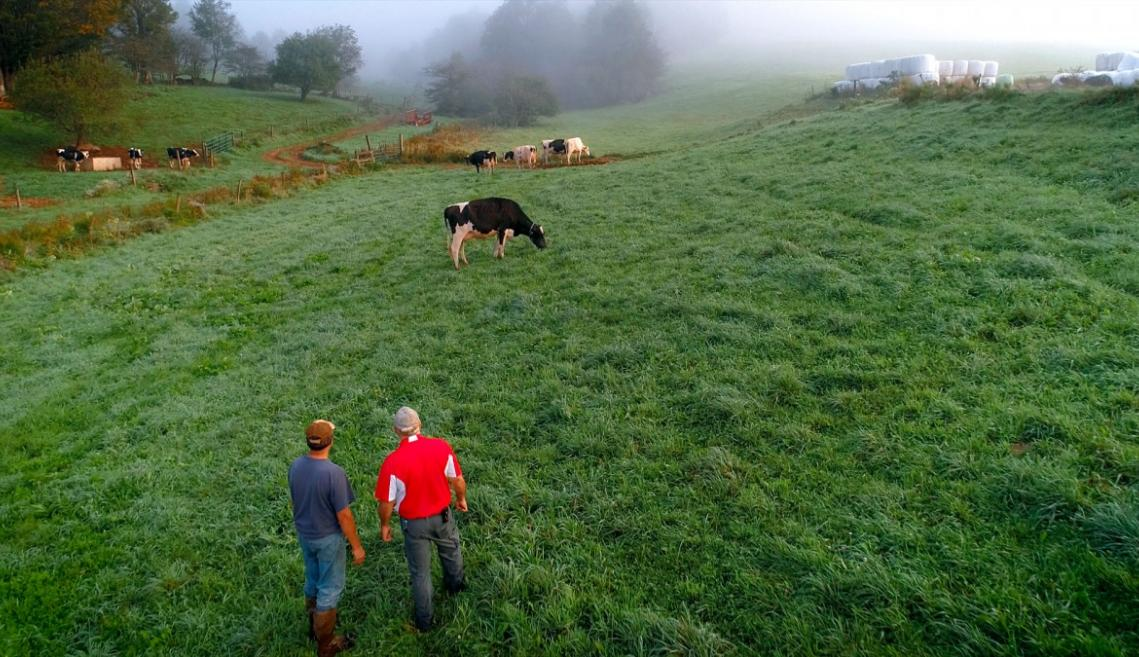 a farm on a hazy morning with two men looking out over the field and a cow grazing
