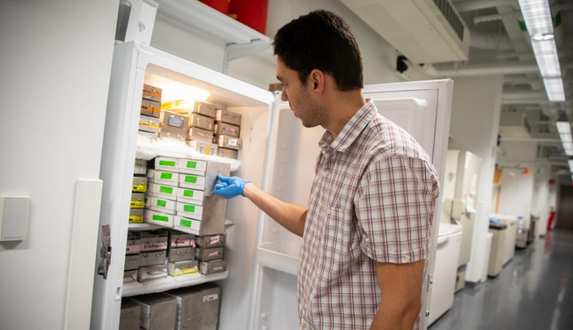 A man organizing frozen cell samples in a freezer