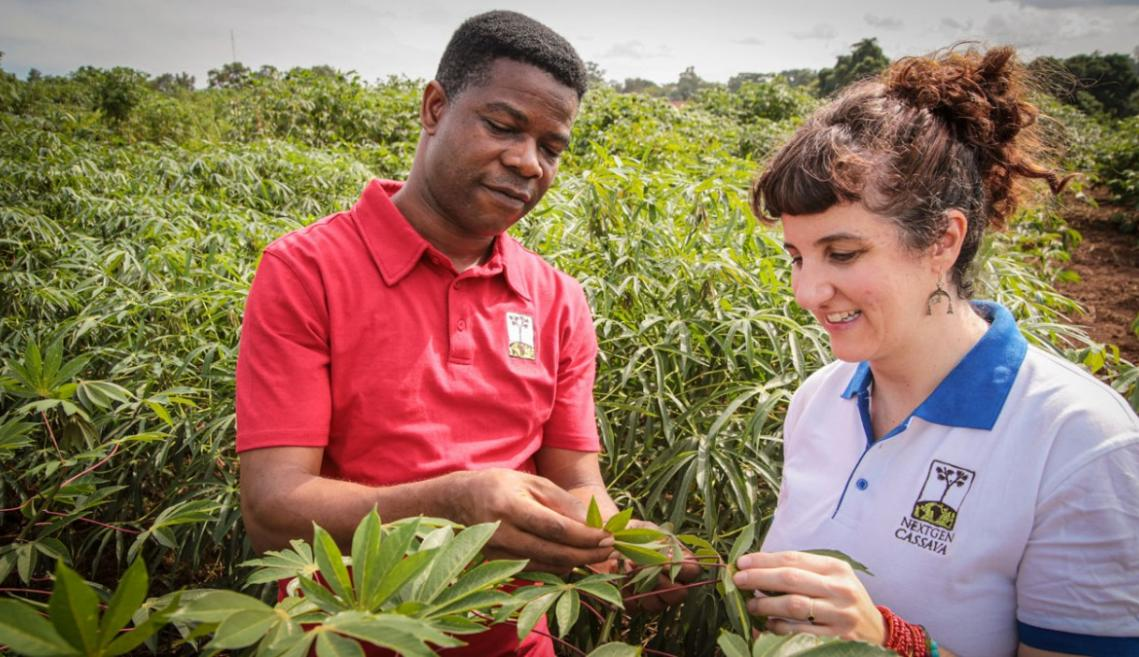 A man and woman stand in a agriculture field and examine plants