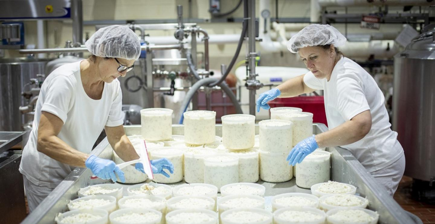 workers putting cheese into molds