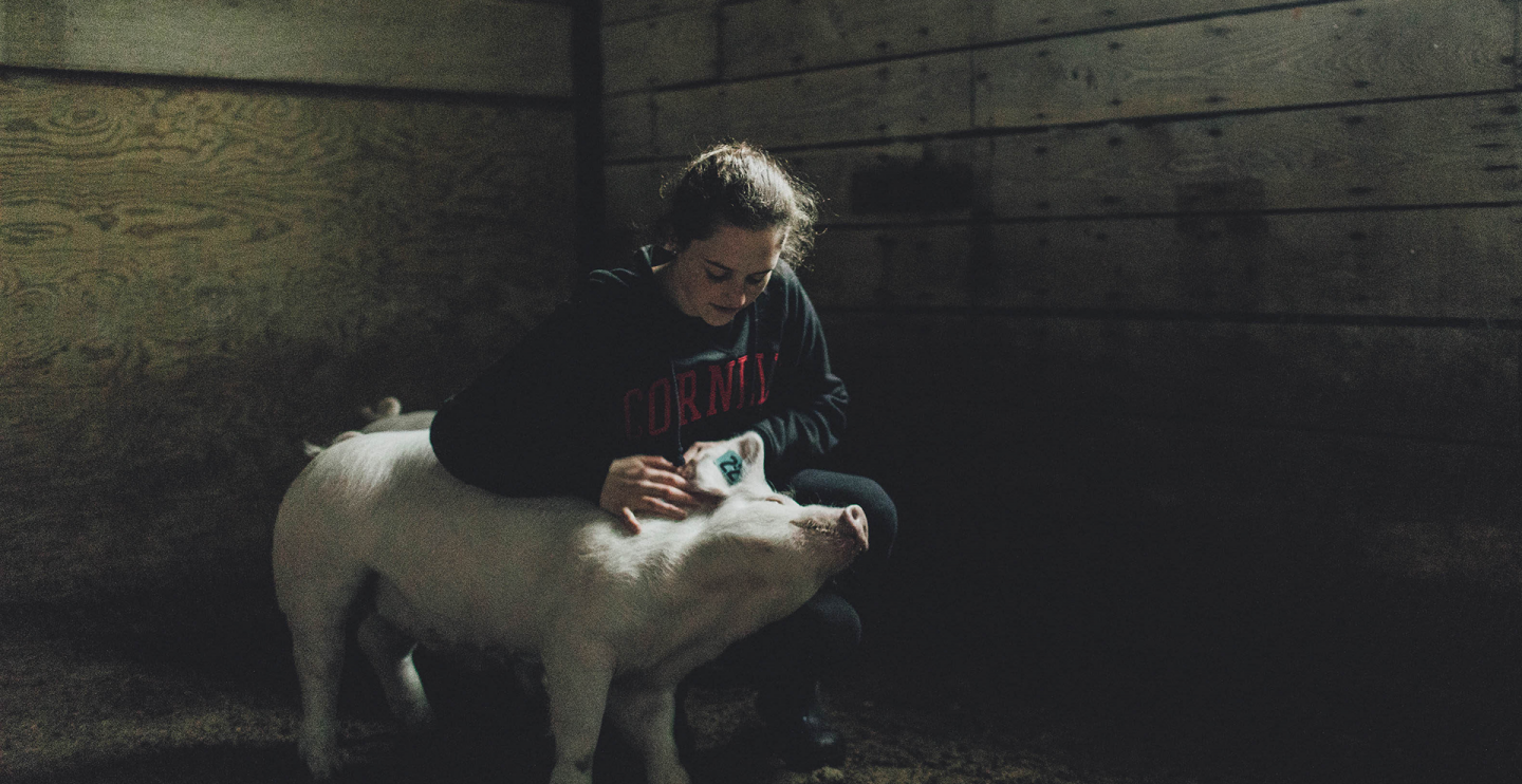 a young woman in a cornell sweatshirt pets a pig
