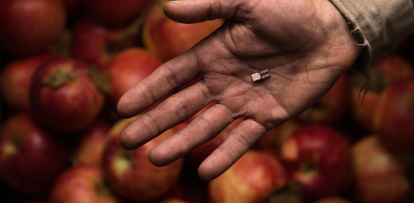 a hand holds a small device over apples