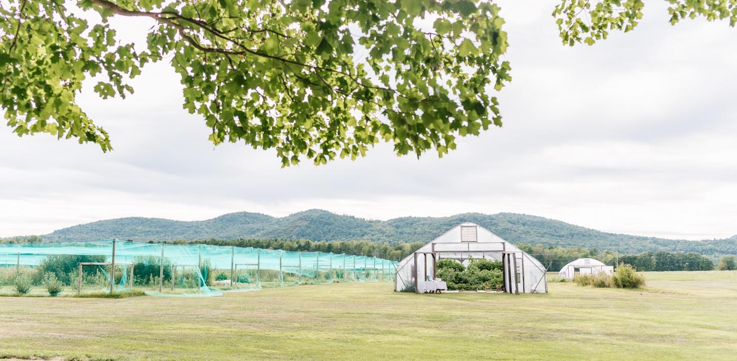 Greenhouse near a field with netting over top
