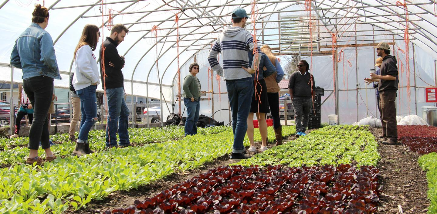 undergraduate class in high tunnel with leafy greens