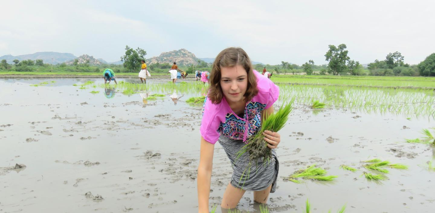 Francine Barchett harvests rice in a paddy