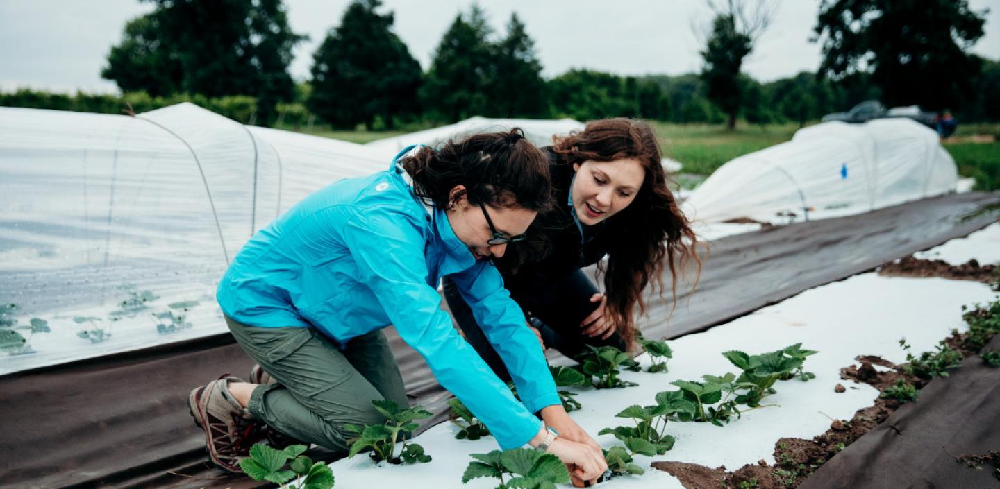 Two students look at plants in a field.