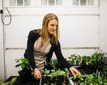 woman tends plants in growth chamber