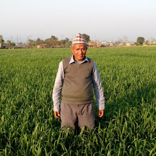 Yam Lal Devkota in his wheat field in Nepal