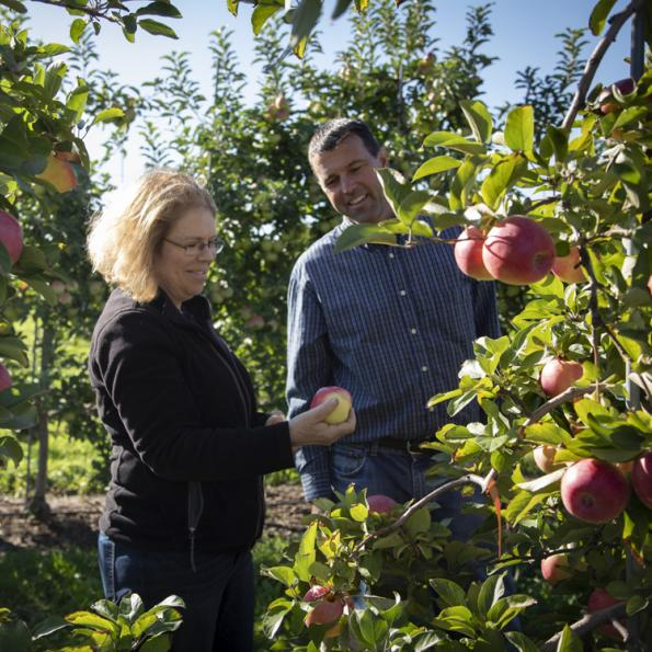 A man and woman working in an apple orchard