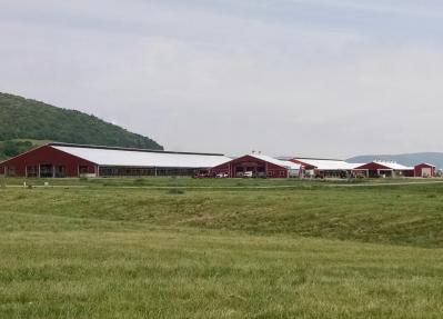 Large farm buildings with cows