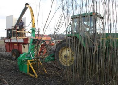 Willow harvested at Cornell AgriTech will be processed to become a biofuel
