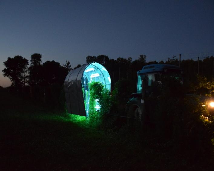 UV light technology being used at night to suppress powdery mildew on grapevines at a Cornell AgriTech research field