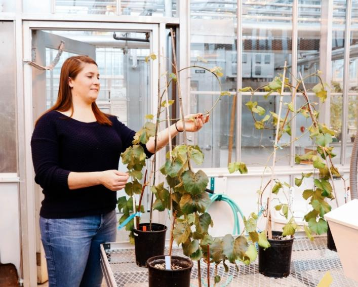 A female graduate student checks on her plants in a greenhouse