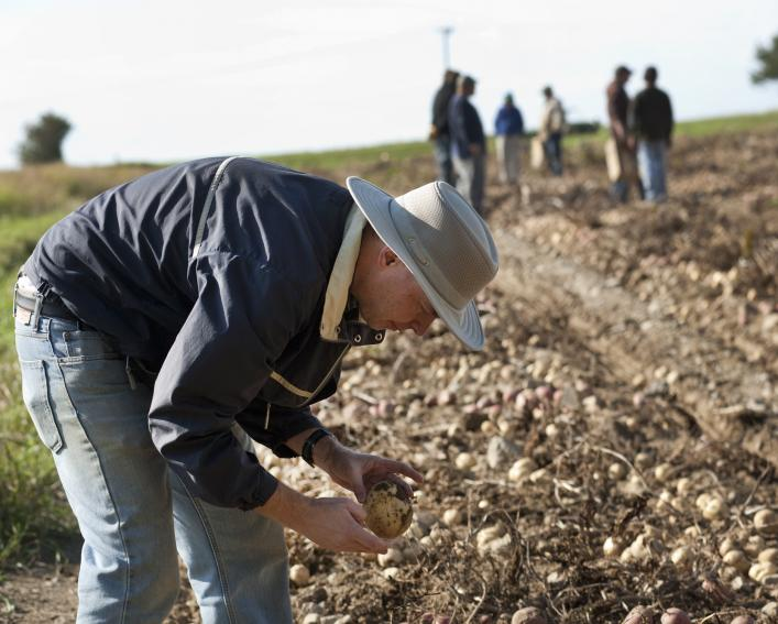 man in hat examines potatoes in the field