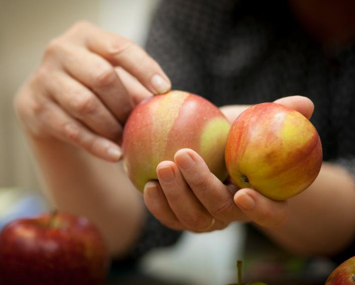 hands holding apples