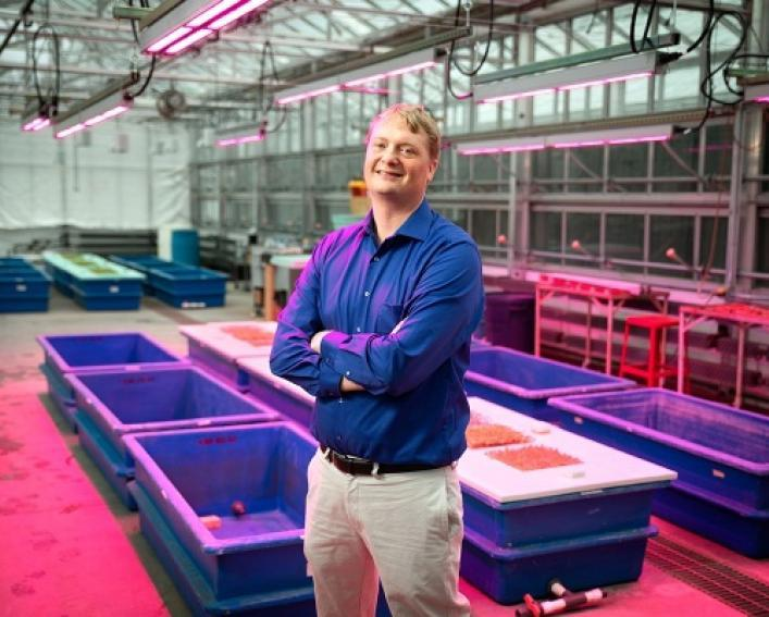 neil mattson in greenhouse with specialized lighting and hyrdoponic system