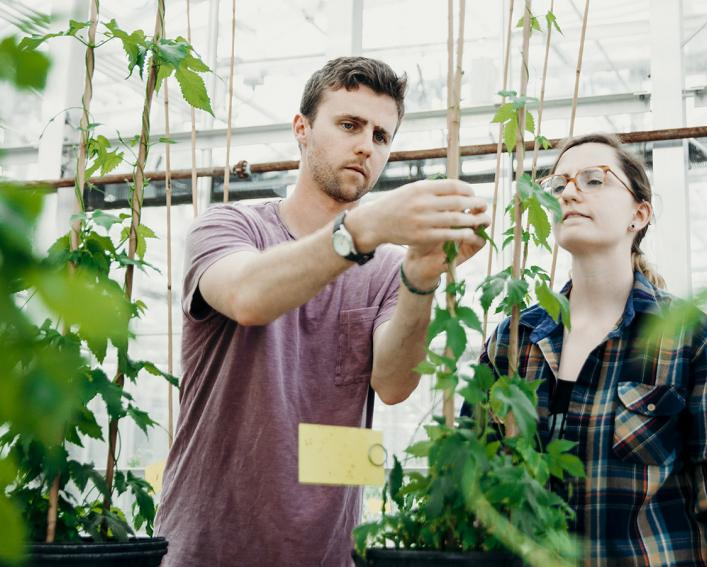 grad students examining hops plants in greenhouse